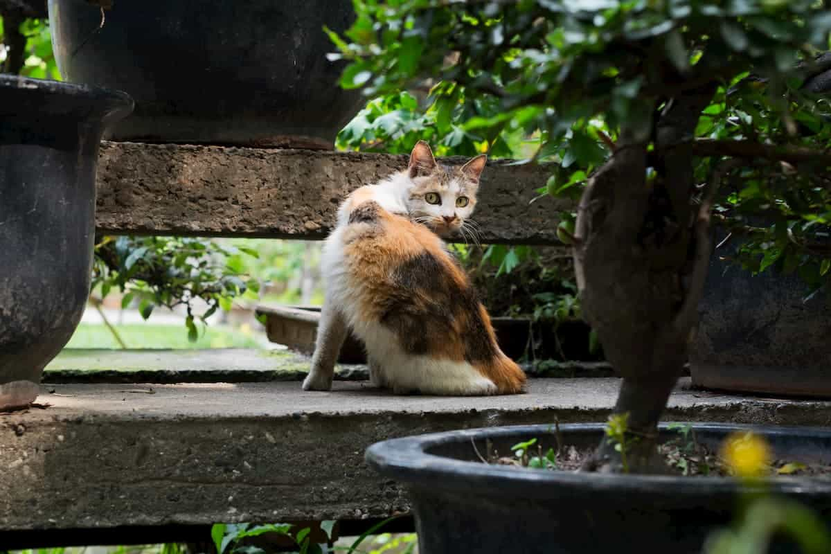 Cat staring at the reader through bonsai trees, post content about Are Bonsai Trees Poisonous to Cats?